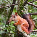 La leçon de l'écureuil