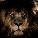 Le lion dans la culture