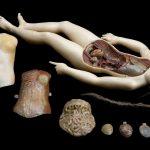 Si on jouait au docteur avec une Vénus anatomique