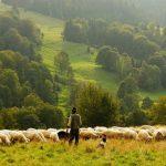 Le kulning ; un chant scandinave