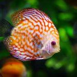 Nager comme un poisson dans l'eau