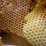Pourquoi les abeilles fabriquent des alvéoles sous la forme que l'on connait ?