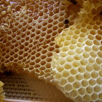 Honey_comb