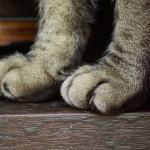 Paradoxe du chat tartine