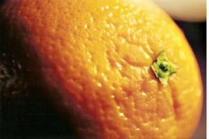 macro_orange