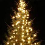 Origine du sapin de Noël